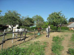 Pirouz,Rider et Somalis