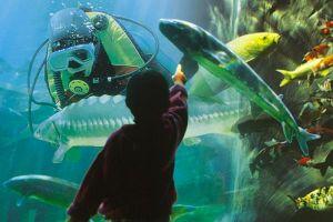 L'aquarium du Bugues